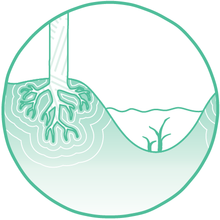 Prevents-erosion-flooding