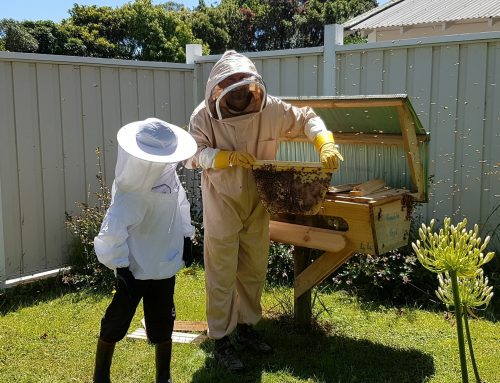 Bee Friends – that's a wrap!