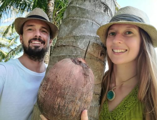 Mr & Mrs Coconut Visit Indonesia